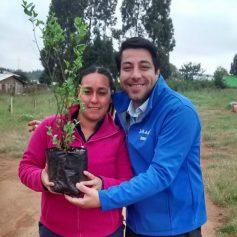 arborizacion-la-araucana